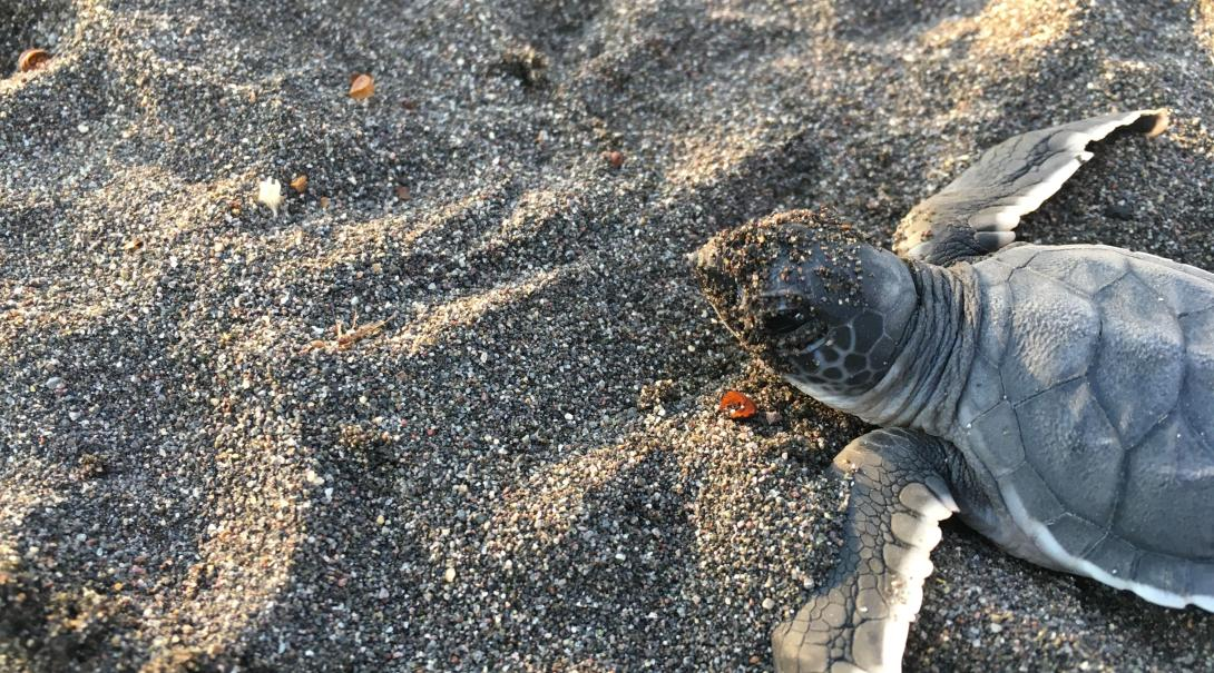 Mexico is a spring break 2020 destination where volunteers release baby turtles safely into the ocean.